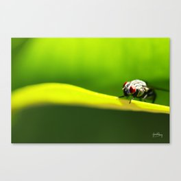 Here's looking at you Canvas Print