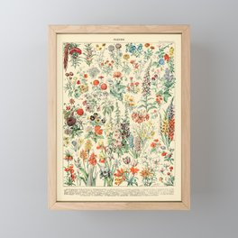 Wildflower Diagram // Fleurs II by Adolphe Millot 19th Century Science Textbook Artwork Framed Mini Art Print