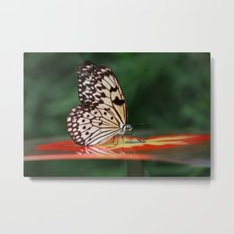 Butterfly On A Shiny Table Metal Print