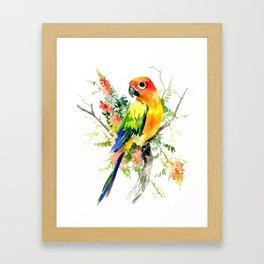 Sun Conure Parakeet, tropical colors parrot art design Framed Art Print