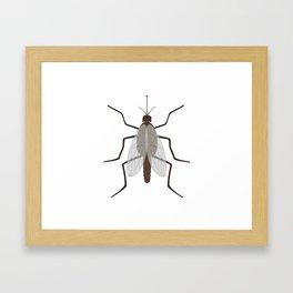 Mosquito Framed Art Print