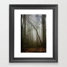 Misty Woods Framed Art Print