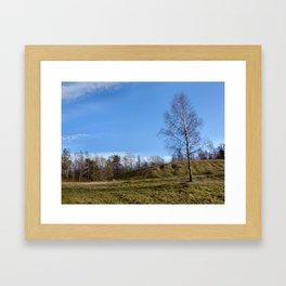 Birch on a hill Framed Art Print