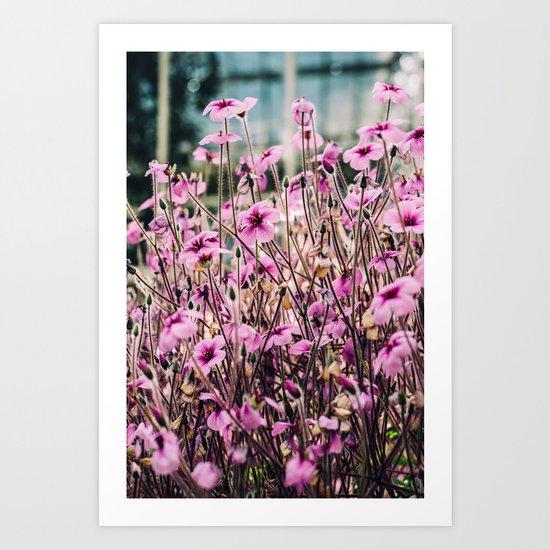 Purple Flowers Blooming Art Print By Pati Designs