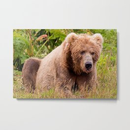 Brown Bear Kodiak Metal Print