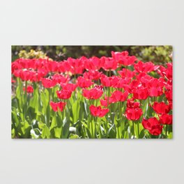 Neon Red Tulips Canvas Print