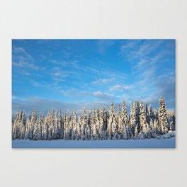Spruce After Snow Storm Color Canvas Print