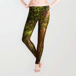 Muir Woods Walkway Leggings