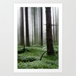 Forest Dream II Art Print
