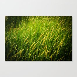Spring Grass Canvas Print
