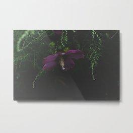 Backyard Hibiscus Metal Print
