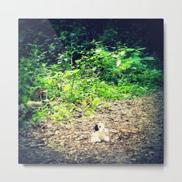 Lost Puppy Dog Metal Print