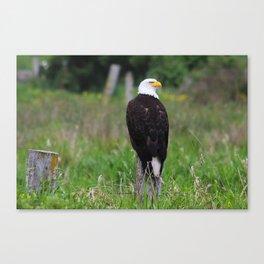 Regal Bald Eagle Canvas Print