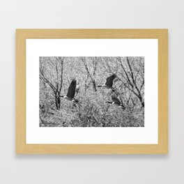 Canada Geese in Black & White Framed Art Print