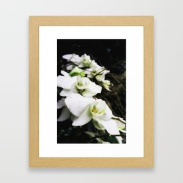 Beauty of Wild Orchids Framed Art Print