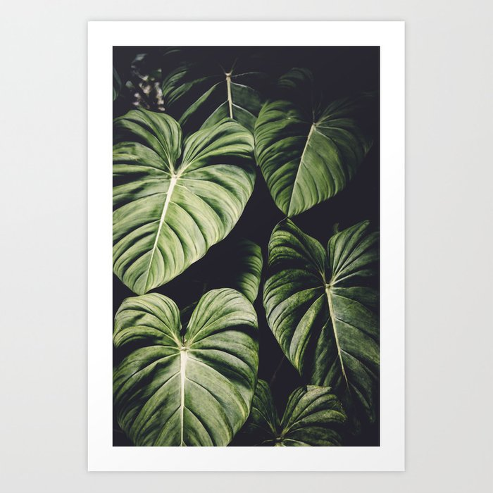 Monstera - Tropical Forest - nature photography Art Print