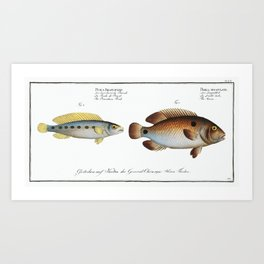 1. Acara (Perca bimaculata) 2. Brasilian Perch (Perca Brasiliensis) from Ichtylogie, or Natural Hist Art Print