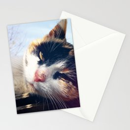 cat lying Stationery Cards