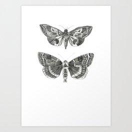 butterlies Art Print