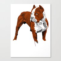 pitbull Canvas Prints featuring Pitbull by Styleuniversal