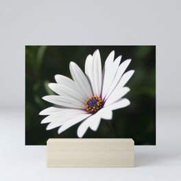 Daisy flower blooming close-up Mini Art Print