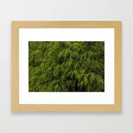 Evergreen Shrub Framed Art Print