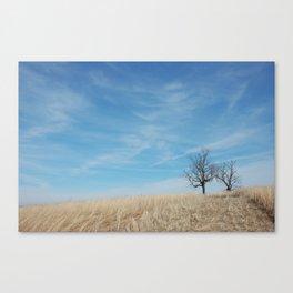 Kentucky Field Canvas Print