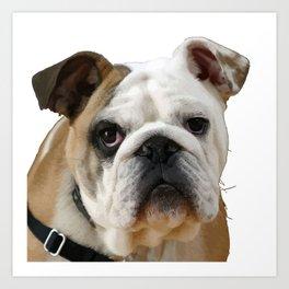 American Bulldog Background Removed Art Print