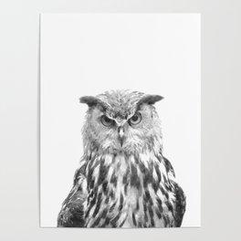 Black and white owl animal portrait Poster
