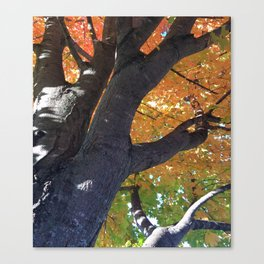 October Speaks Louder Than Other Months Canvas Print