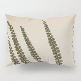 Derbyshire Fern Pillow Sham