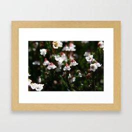 California Flowers  Framed Art Print