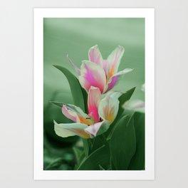 Vintage tulips 8 Art Print