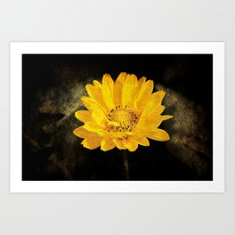 Beautiful Sunflower with Dark Brown Background Art Print