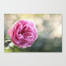Lady in pink - Pink romantic rose at Backlight- roses flowers Canvas Print