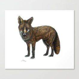 The Red Fox Canvas Print
