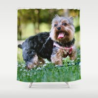 yorkie Shower Curtains featuring Darling Yorkie by IowaShots