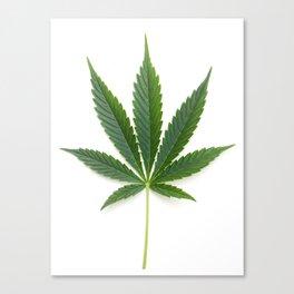 Cannabis/Marijuana/Weed leaf Canvas Print