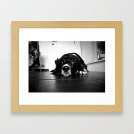 Waiting dog Framed Art Print