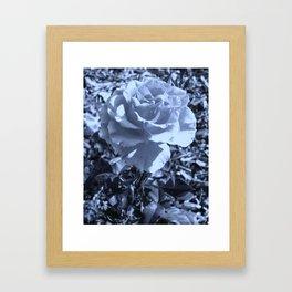roses VIII Framed Art Print