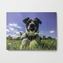 Cute dog at the beach Metal Print