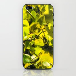Colorado Aspens iPhone Skin