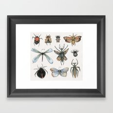 Entomology Framed Art Print