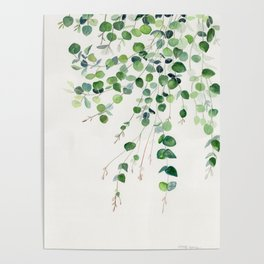 Eucalyptus Watercolor Poster