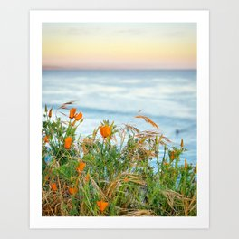 Pacific Poppies Art Print