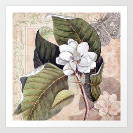 Vintage White Magnolia Art Print