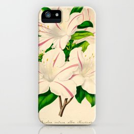 Azalea Alba Magnifica (Rhododendron indica) Vintage Botanical Floral Scientific Illustration iPhone Case