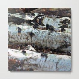 Birch Logs Metal Print