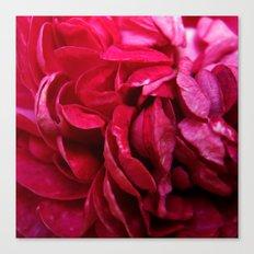 rosy petals Canvas Print