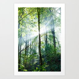 early morning rays Art Print